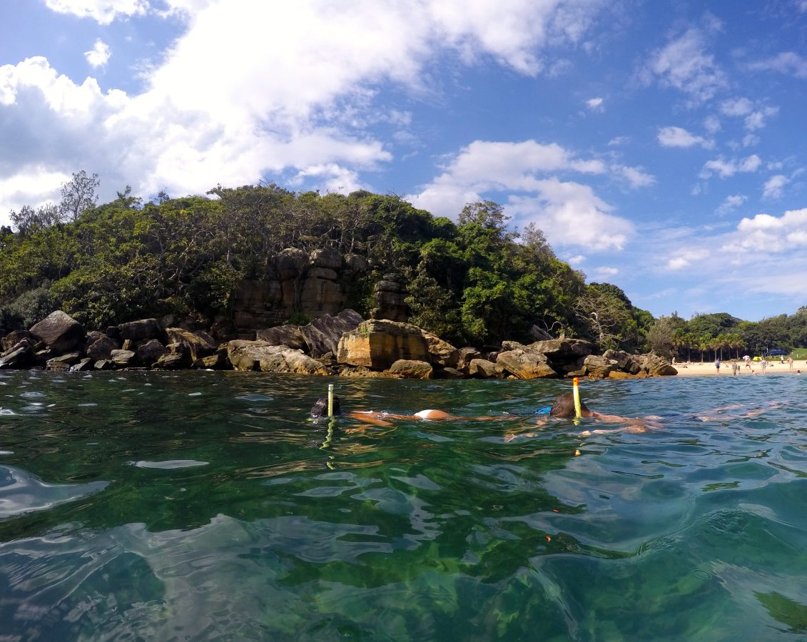Snorkelling in Manly